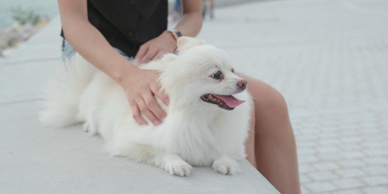 Consejo: ¿Alérgico a su mascota?